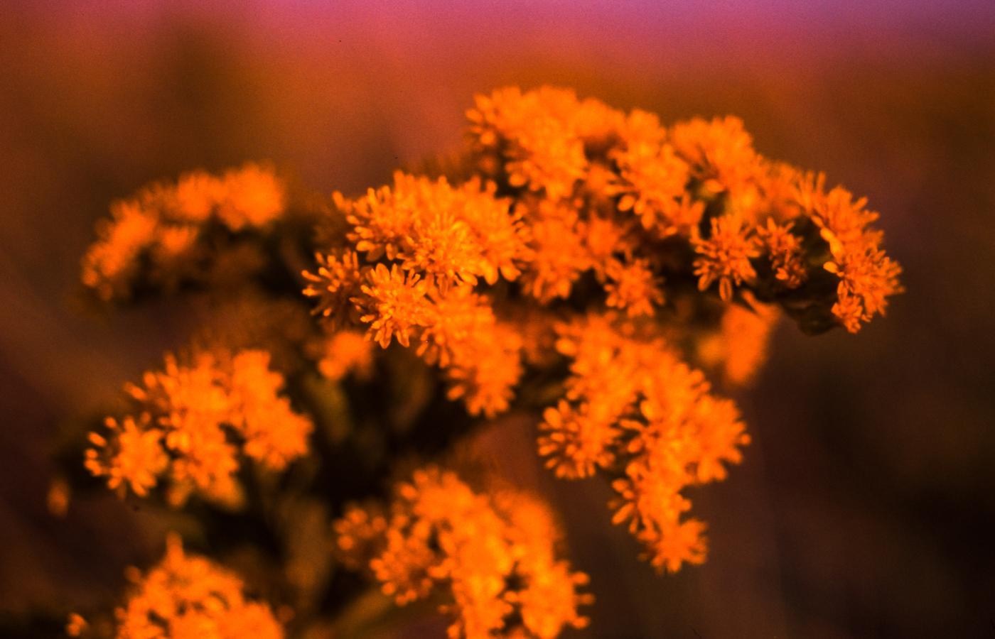 kodachrome-flowers-4k-6s.jpg