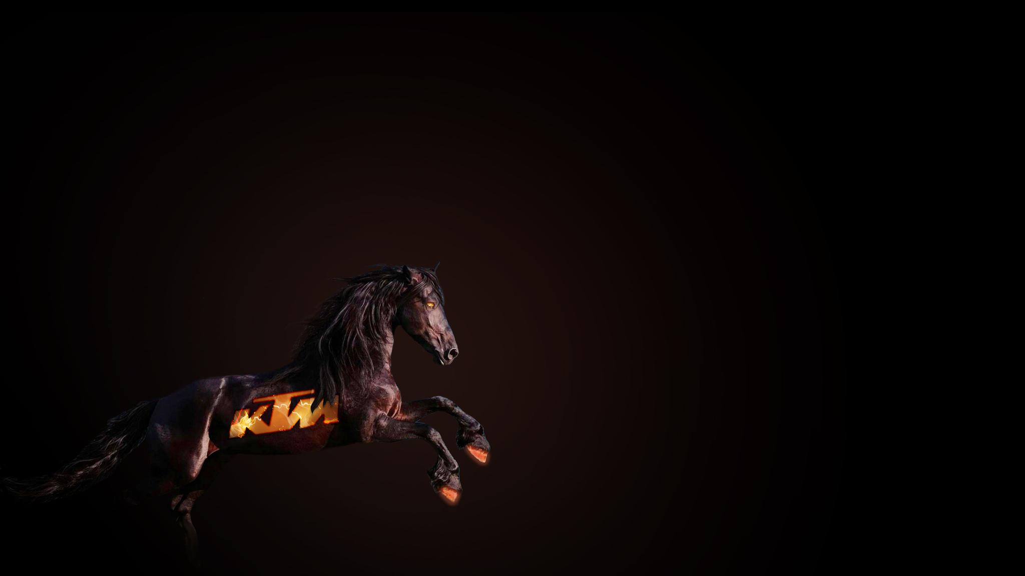 ktm-horse-pic.jpg