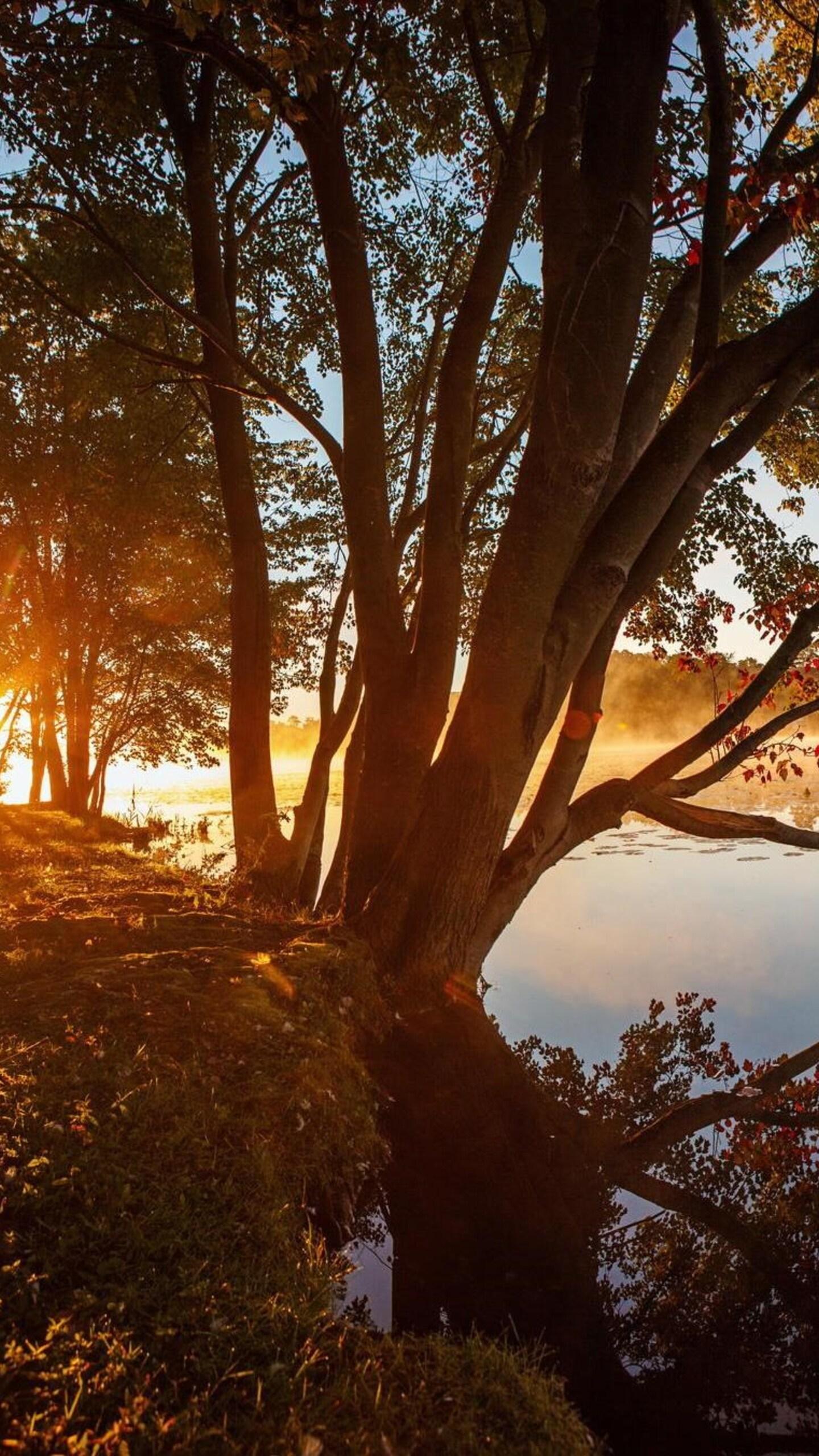 lake-tree-reflection-wide.jpg
