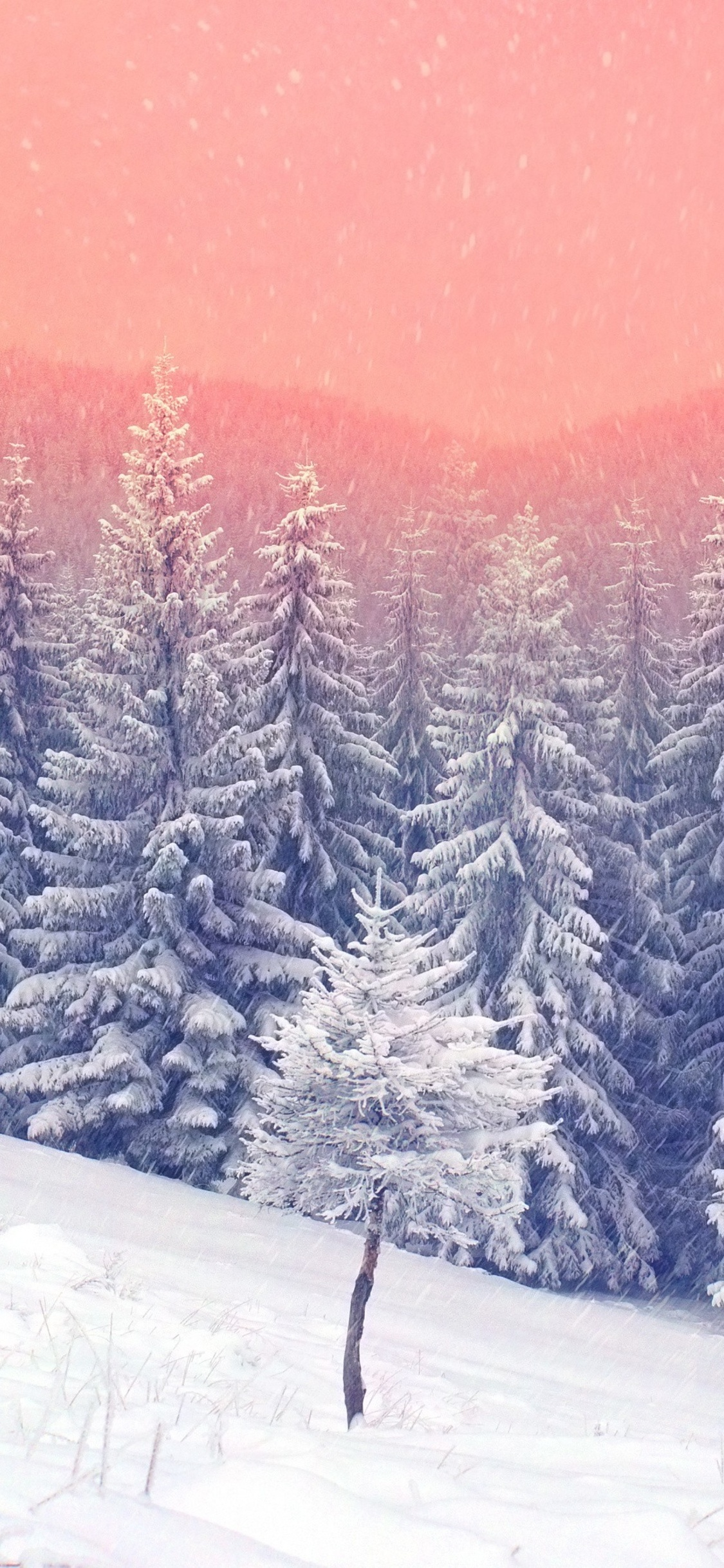landscape-snow-trees-5k-vs.jpg