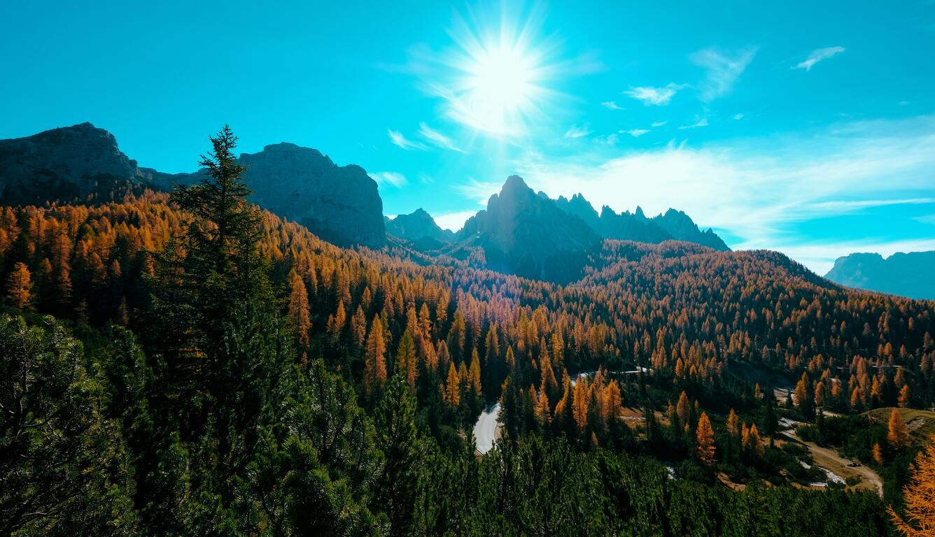 landscape-trees-nature-forest-5k-ik.jpg