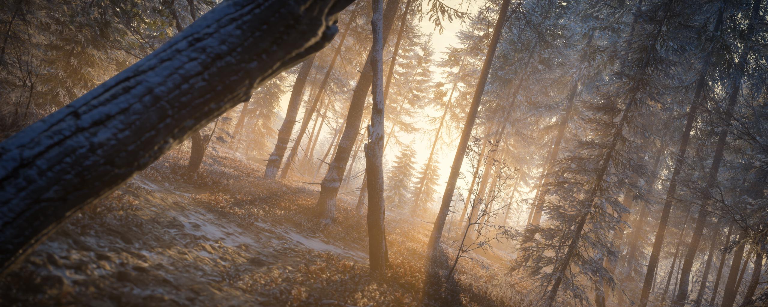 last-rays-of-sun-evening-in-forest-4k-x6.jpg