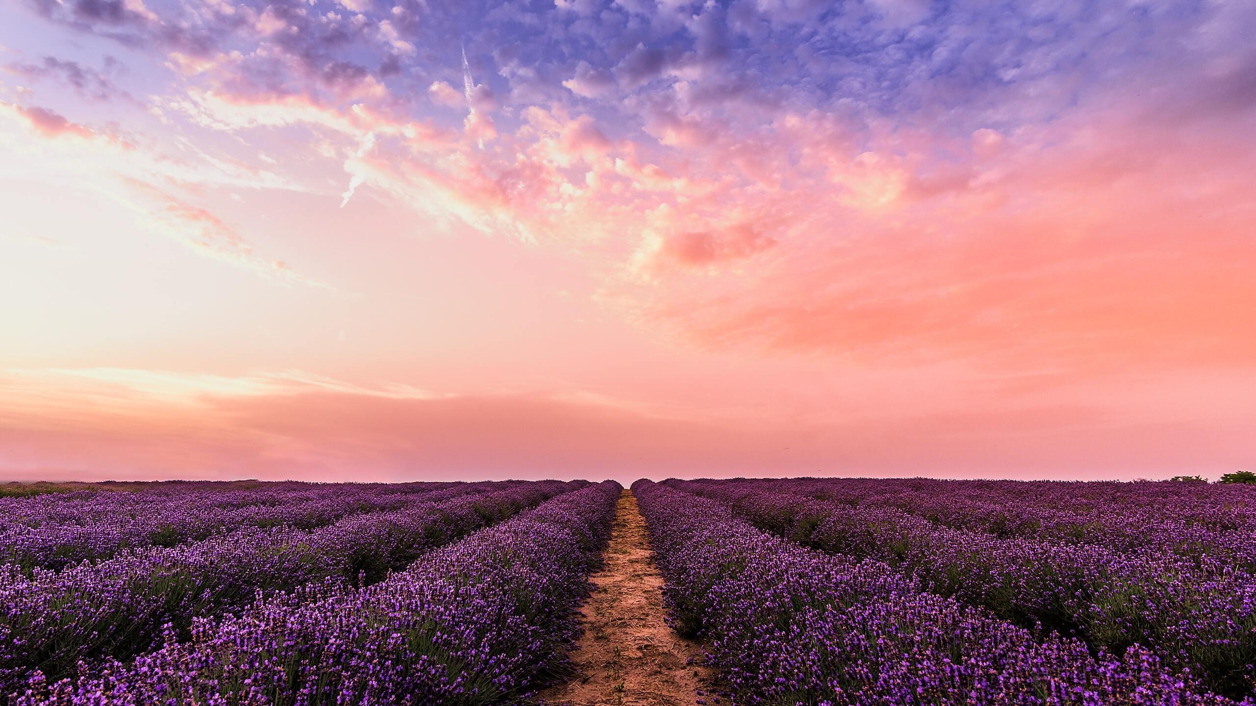 lavender-field-under-pink-sky-5k-ef.jpg