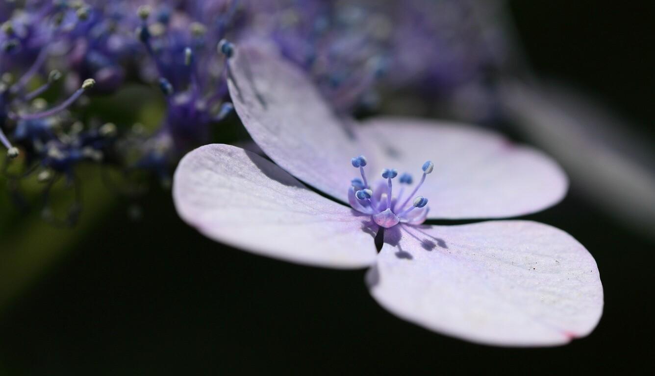 lavender-flower-petals.jpg