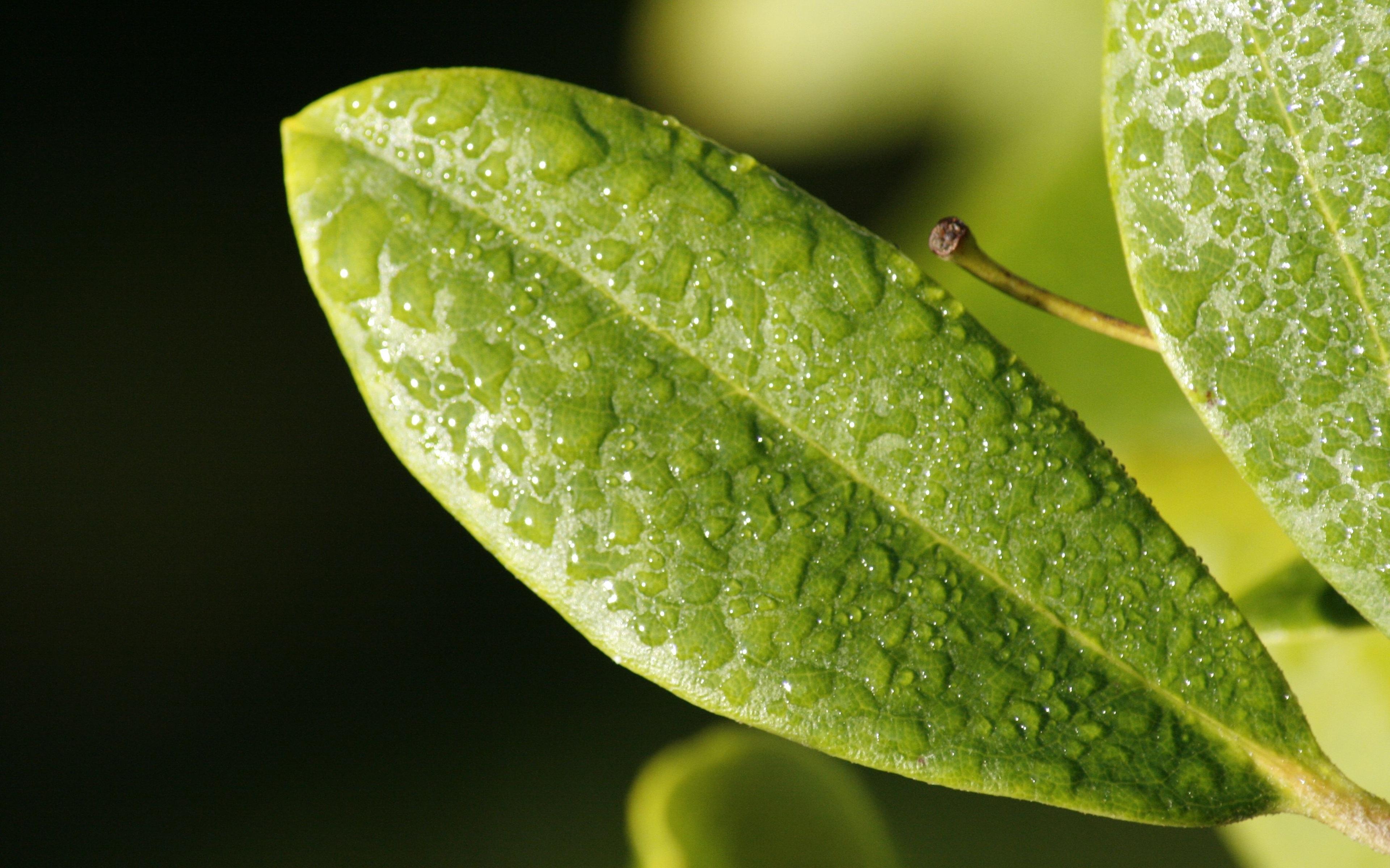 leaf-drop-dew-surface.jpg