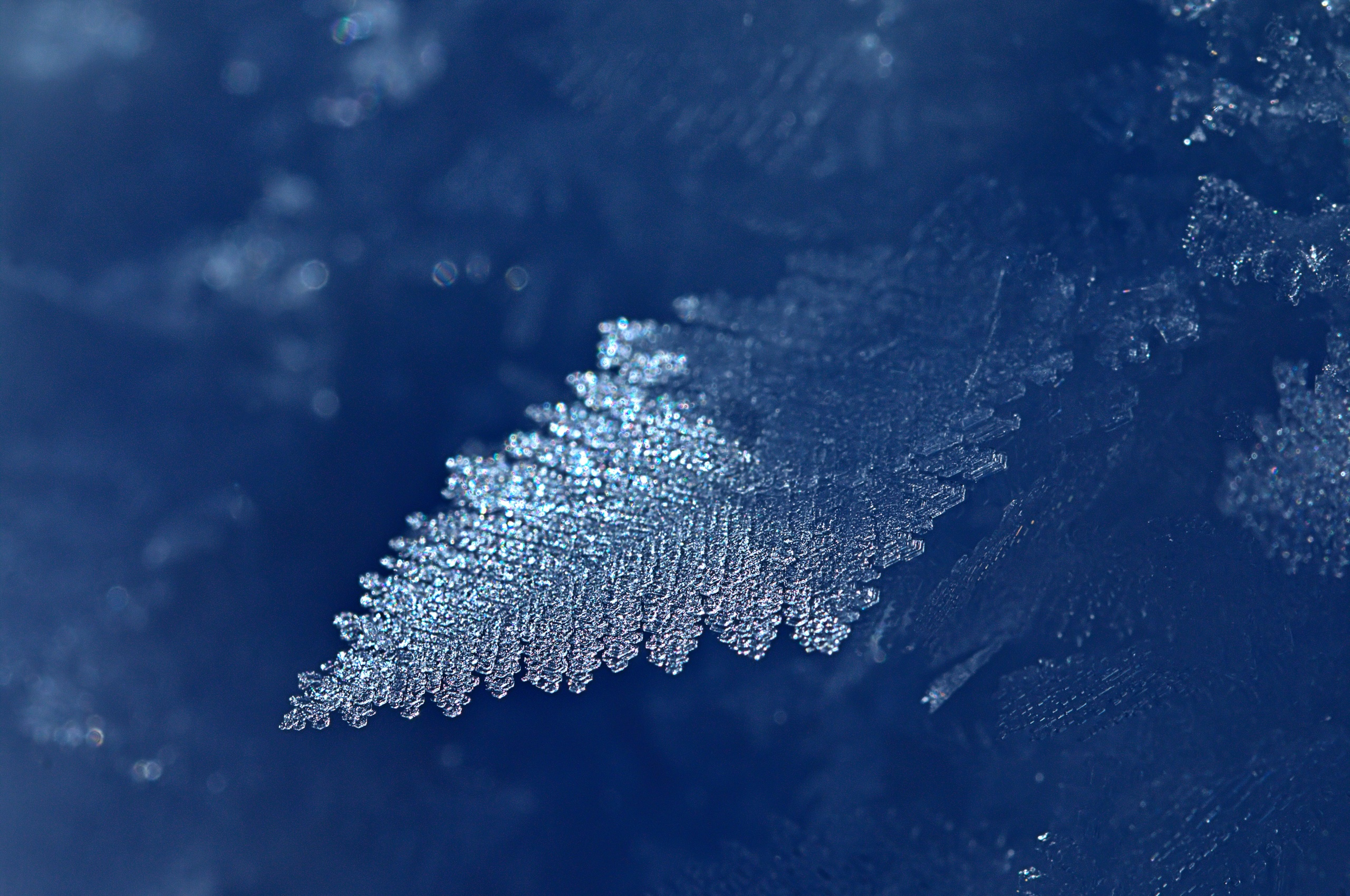 leaf-ice-frost-dq.jpg