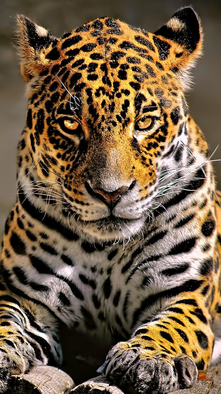 leopard-4k-glowing-eyes-kv.jpg