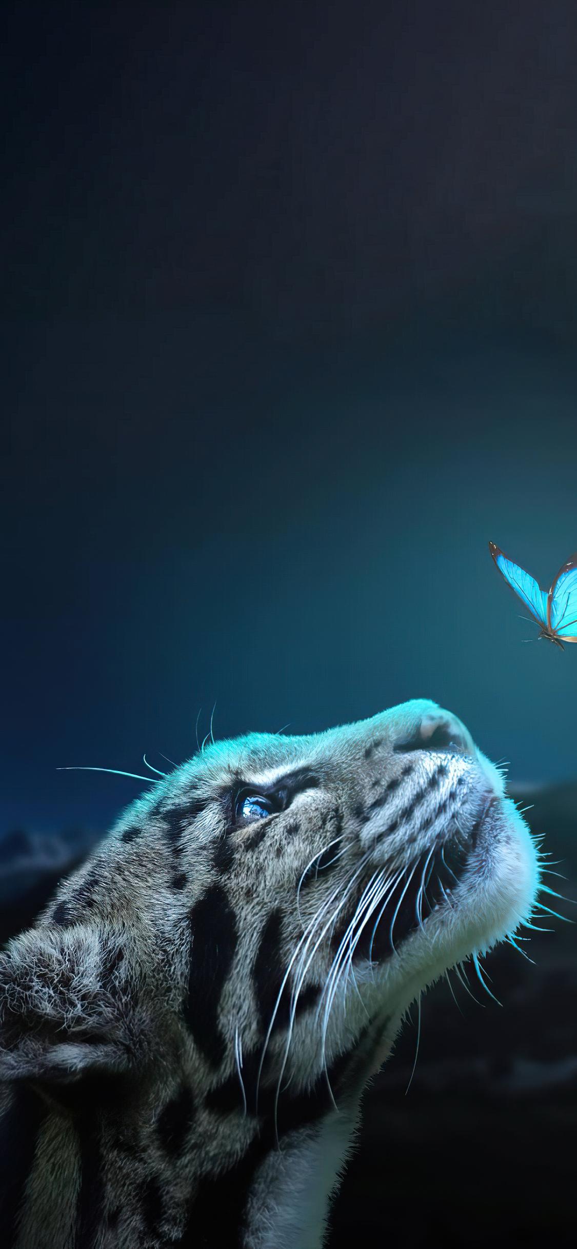 leopard-butterfly-connection-5k-2k.jpg