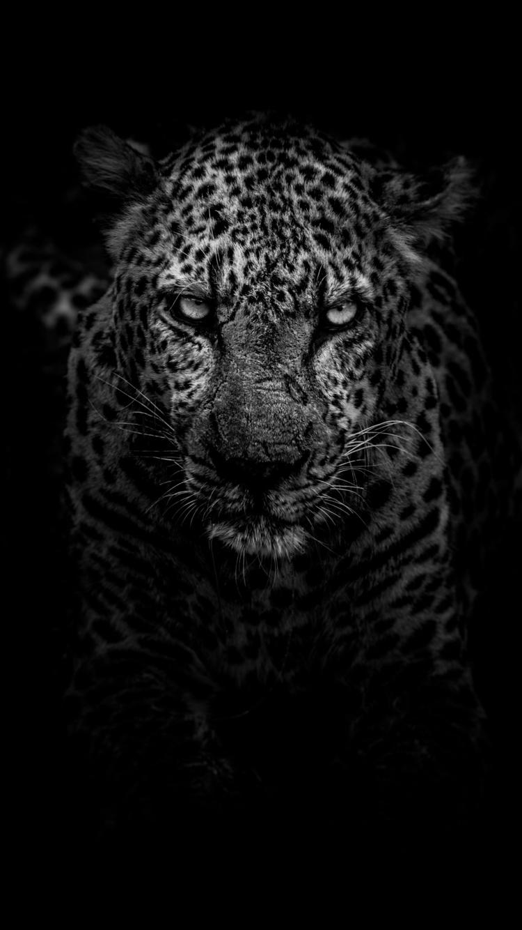leopard-dark-monochrome-5k-m0.jpg