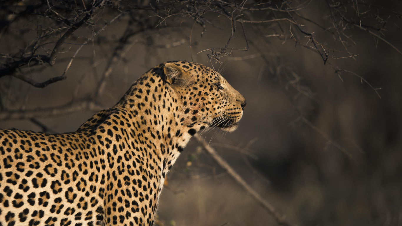 leopard-sd.jpg