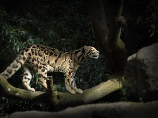 leopard-silent-walk-5k-46.jpg