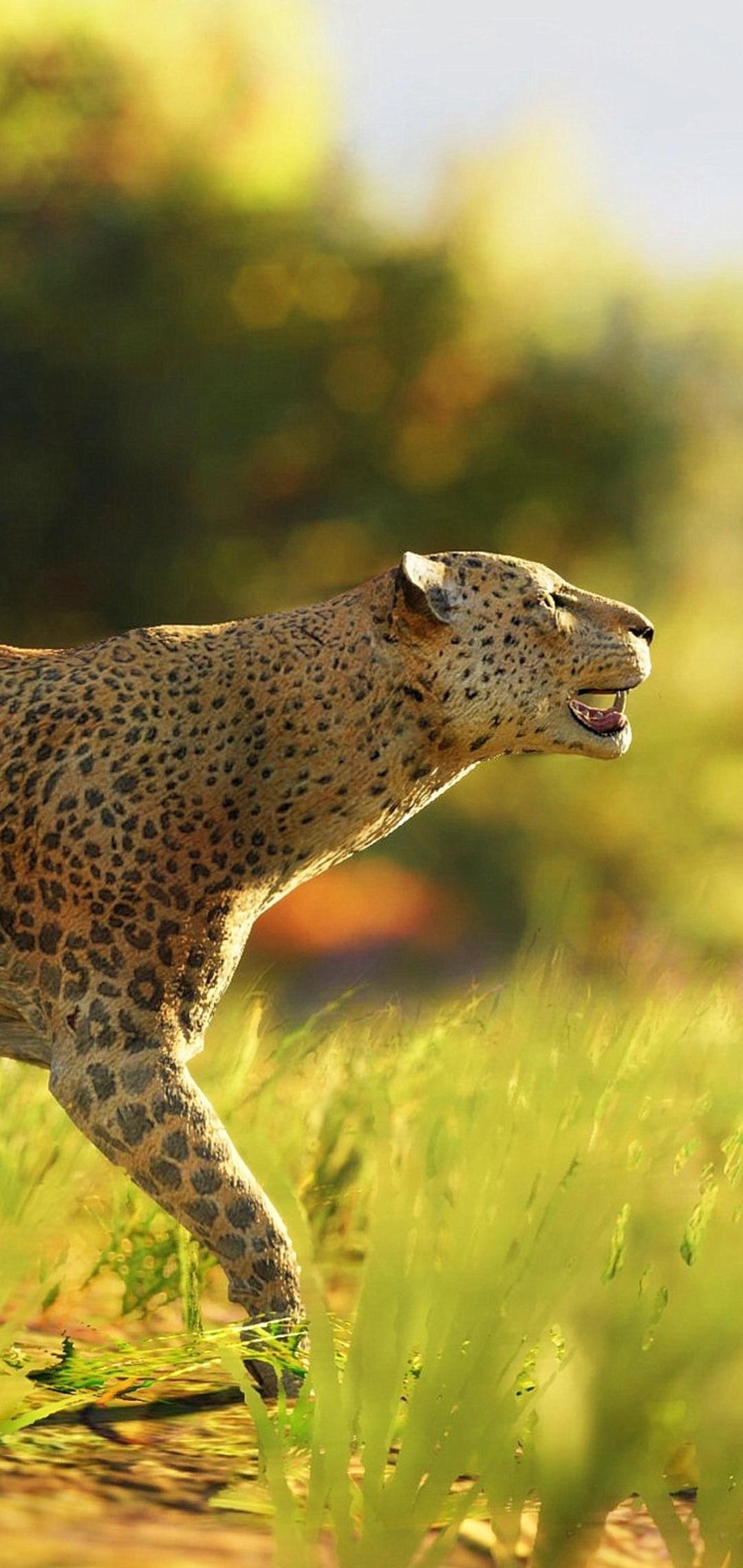 leopard-wild-4k-t4.jpg