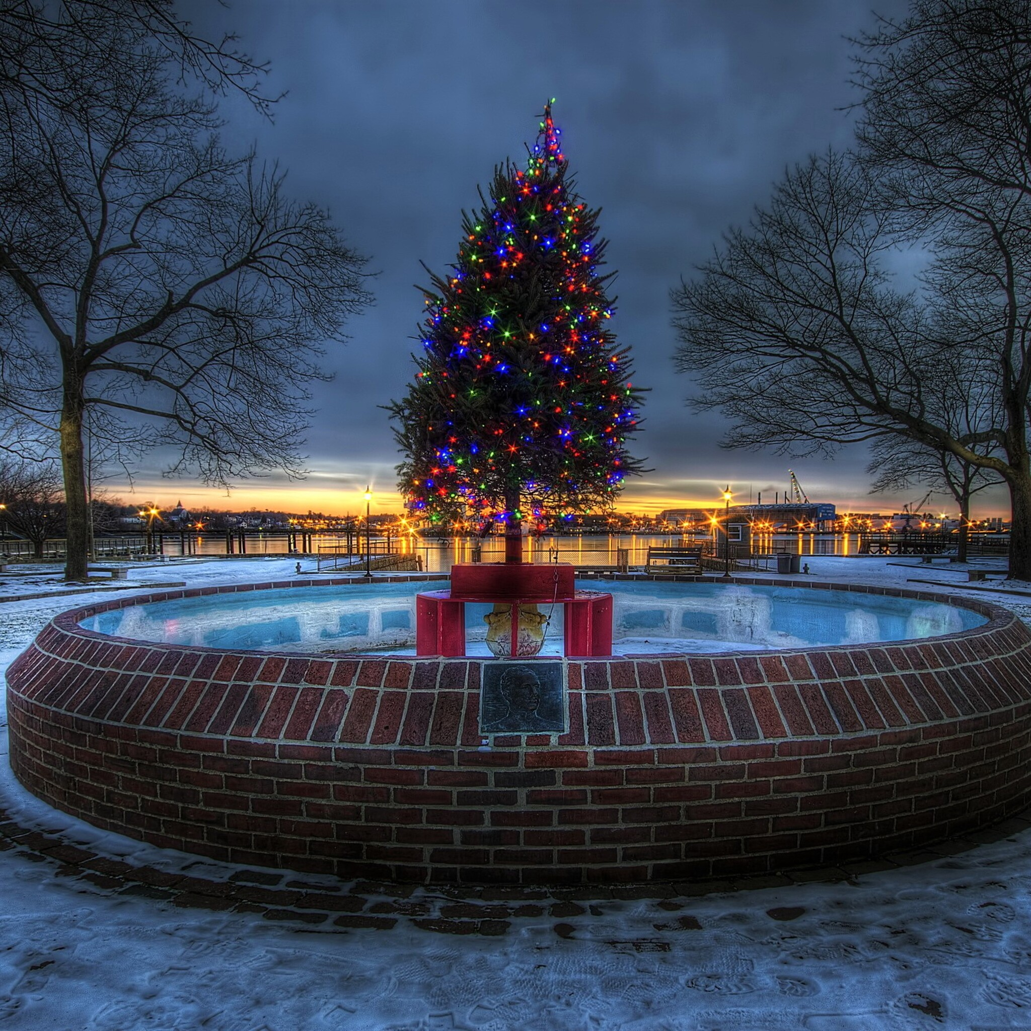 lighted-christmas-tree-8b.jpg
