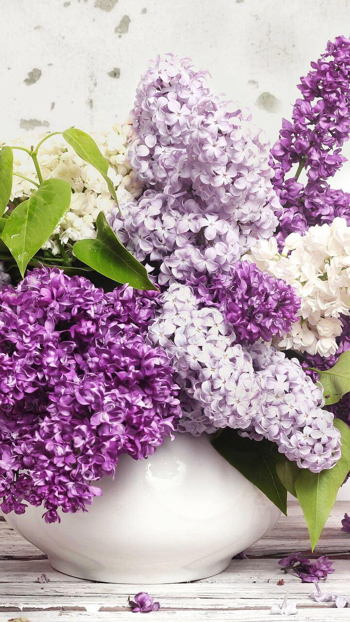 lilac-ad.jpg