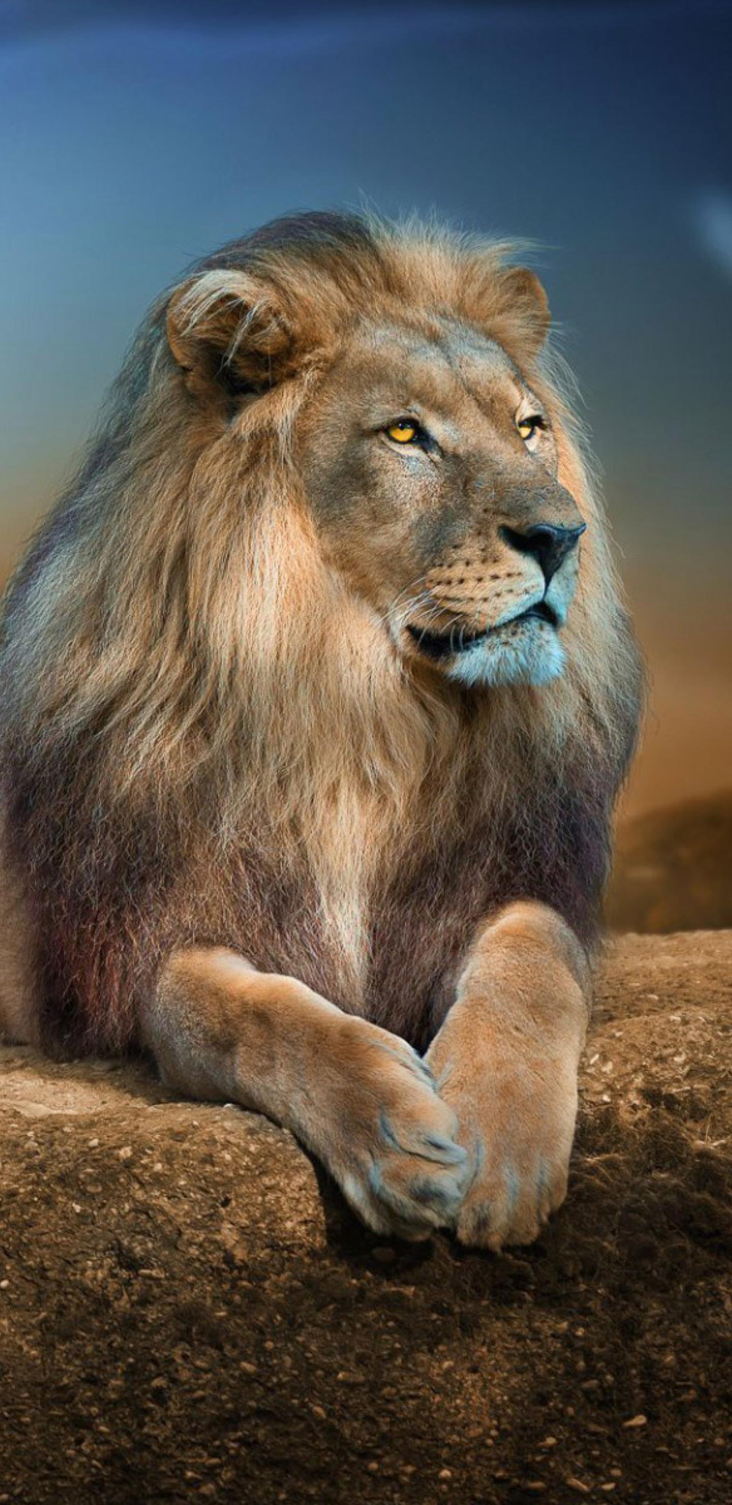1440x2960 Lion 2 Samsung Galaxy Note 9 8 S9 S8 S8 Qhd Hd 4k