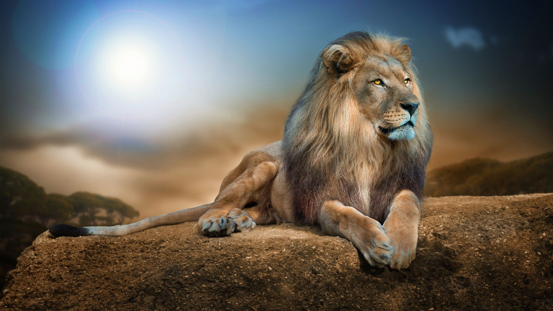 1920x1080 lion 2 laptop full hd 1080p hd 4k wallpapers, images