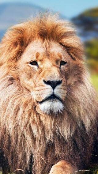 lion-4k.jpg