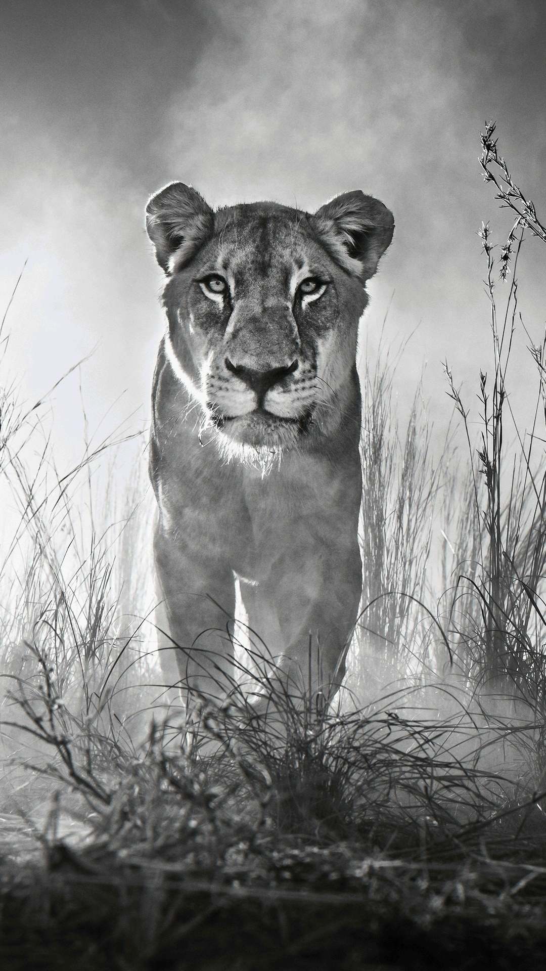 1080x1920 Lion 4k Black And White Iphone 7,6s,6 Plus ...