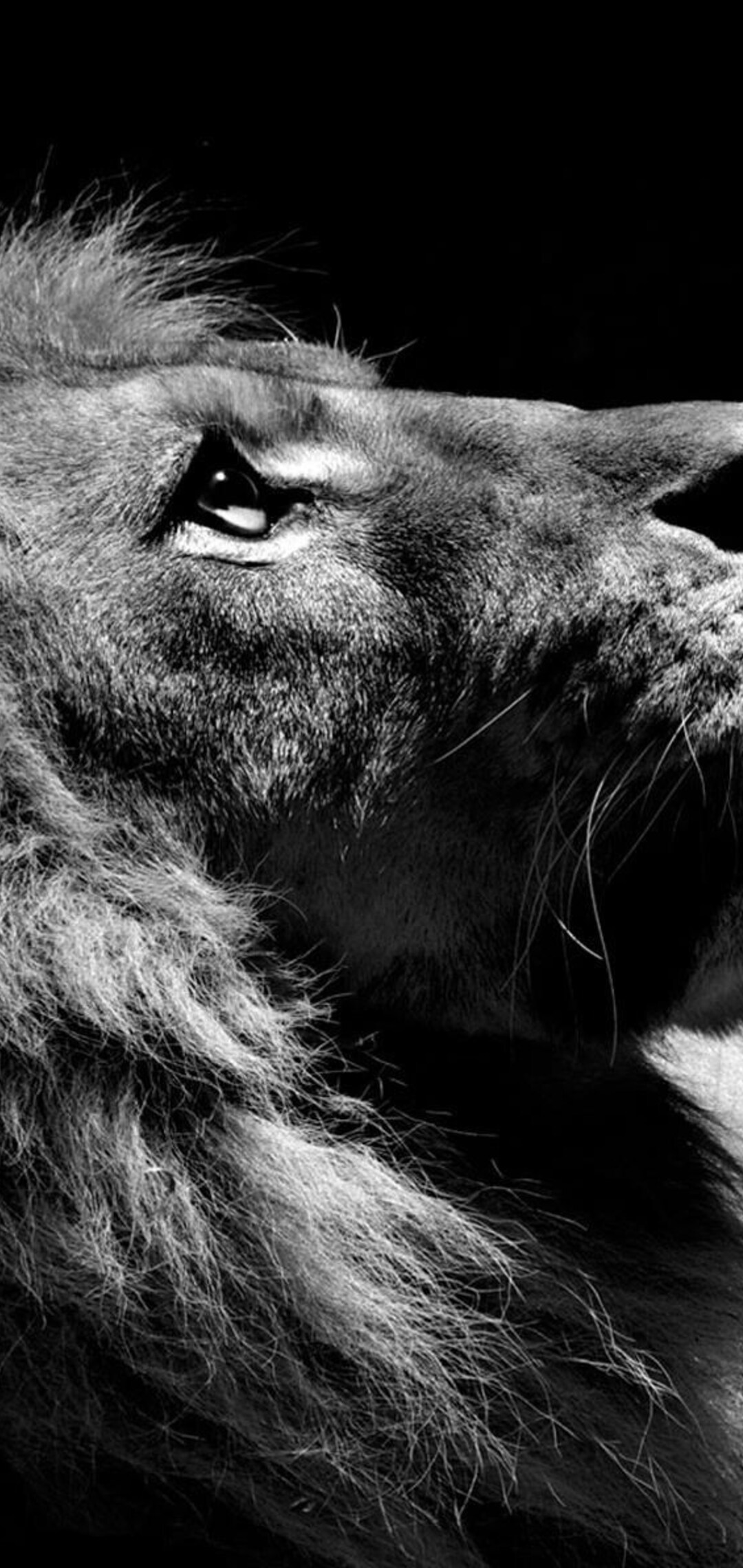 lion-black-and-white.jpg