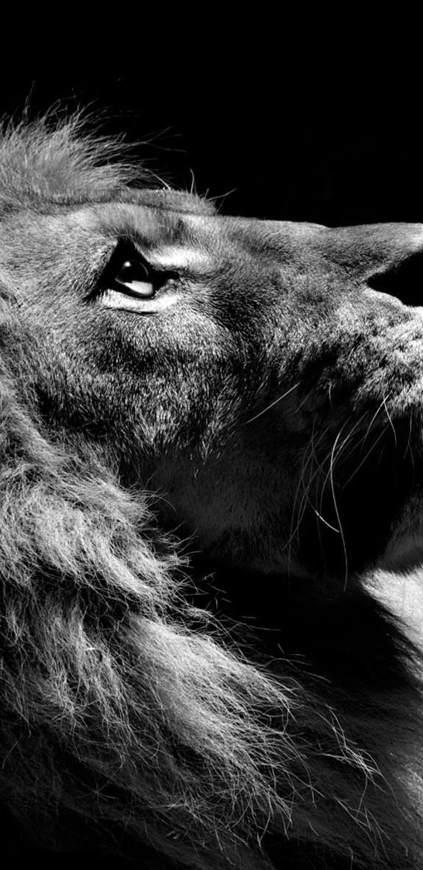 1440x2960 Lion Black And White Samsung Galaxy Note 98 S9