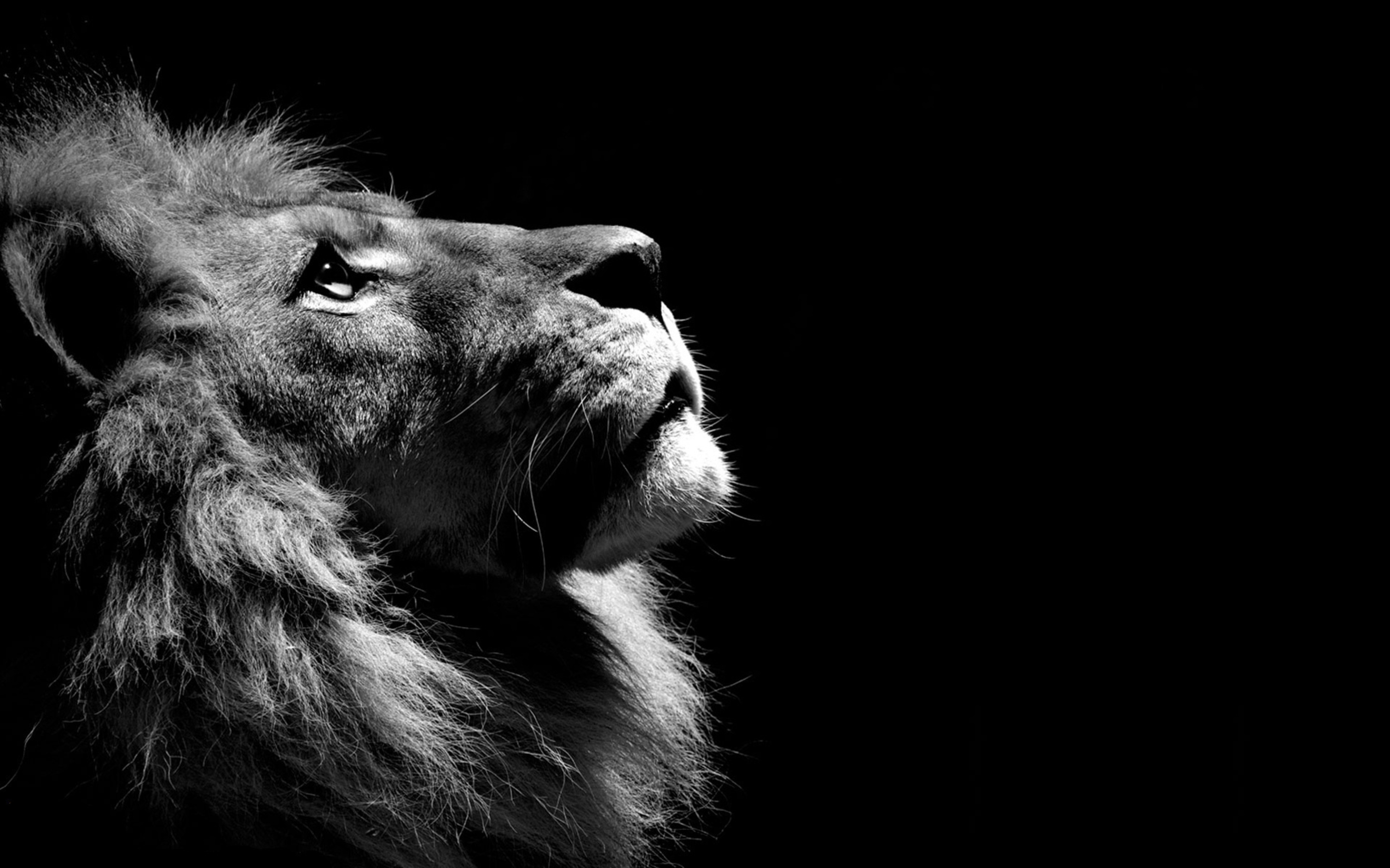 Must see Wallpaper Macbook Lion - lion-black-and-white-2880x1800  Collection_278125.jpg