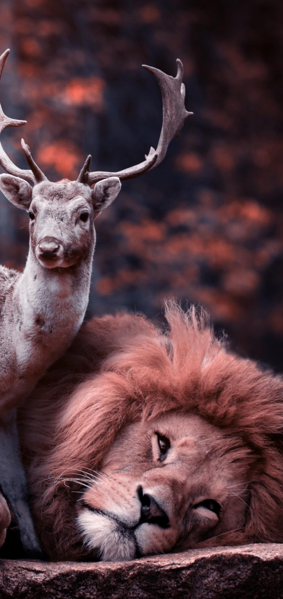 lion-deer-w5.jpg