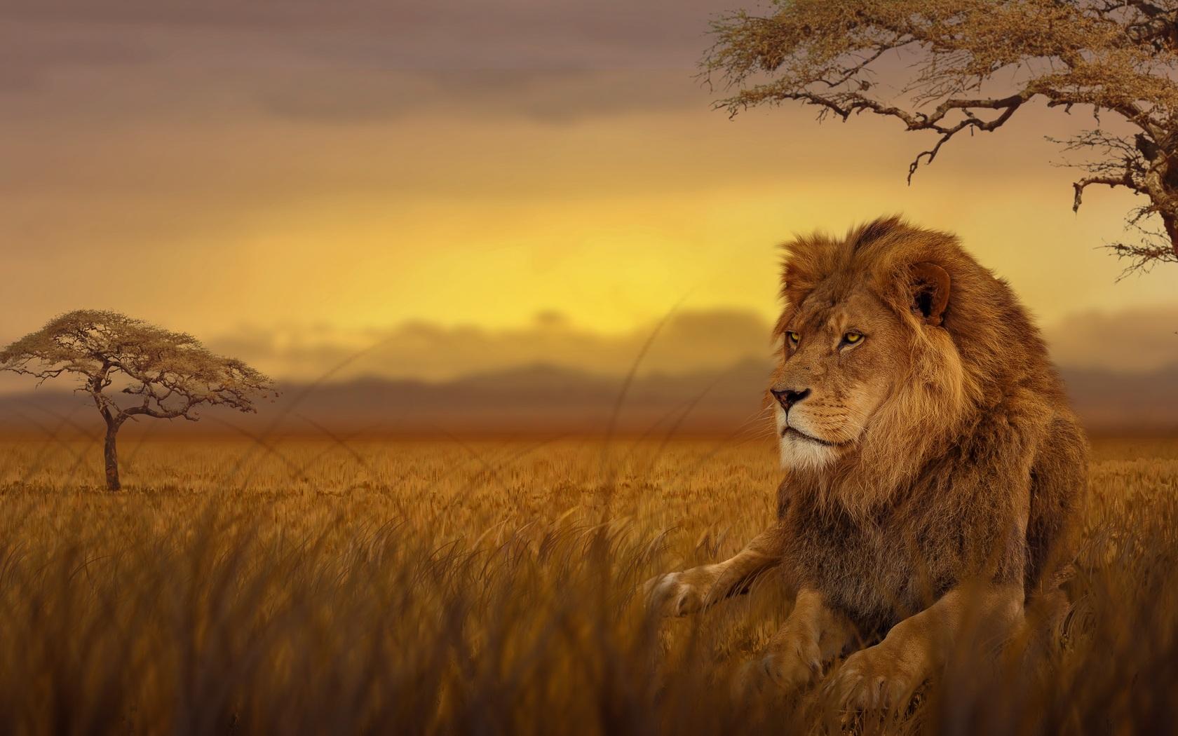 lion-forest-5k-0v.jpg