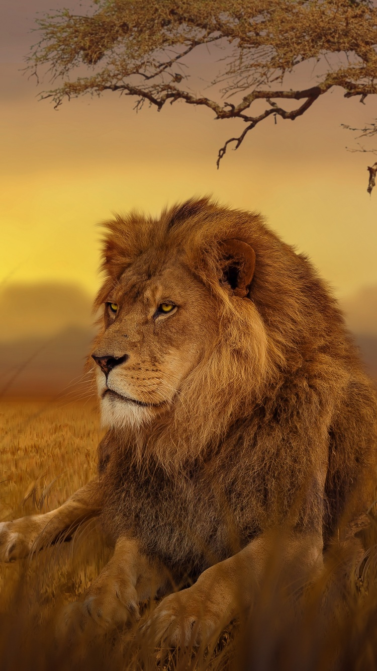 750x1334 Lion Forest 5k Iphone 6 Iphone 6s Iphone 7 Hd 4k