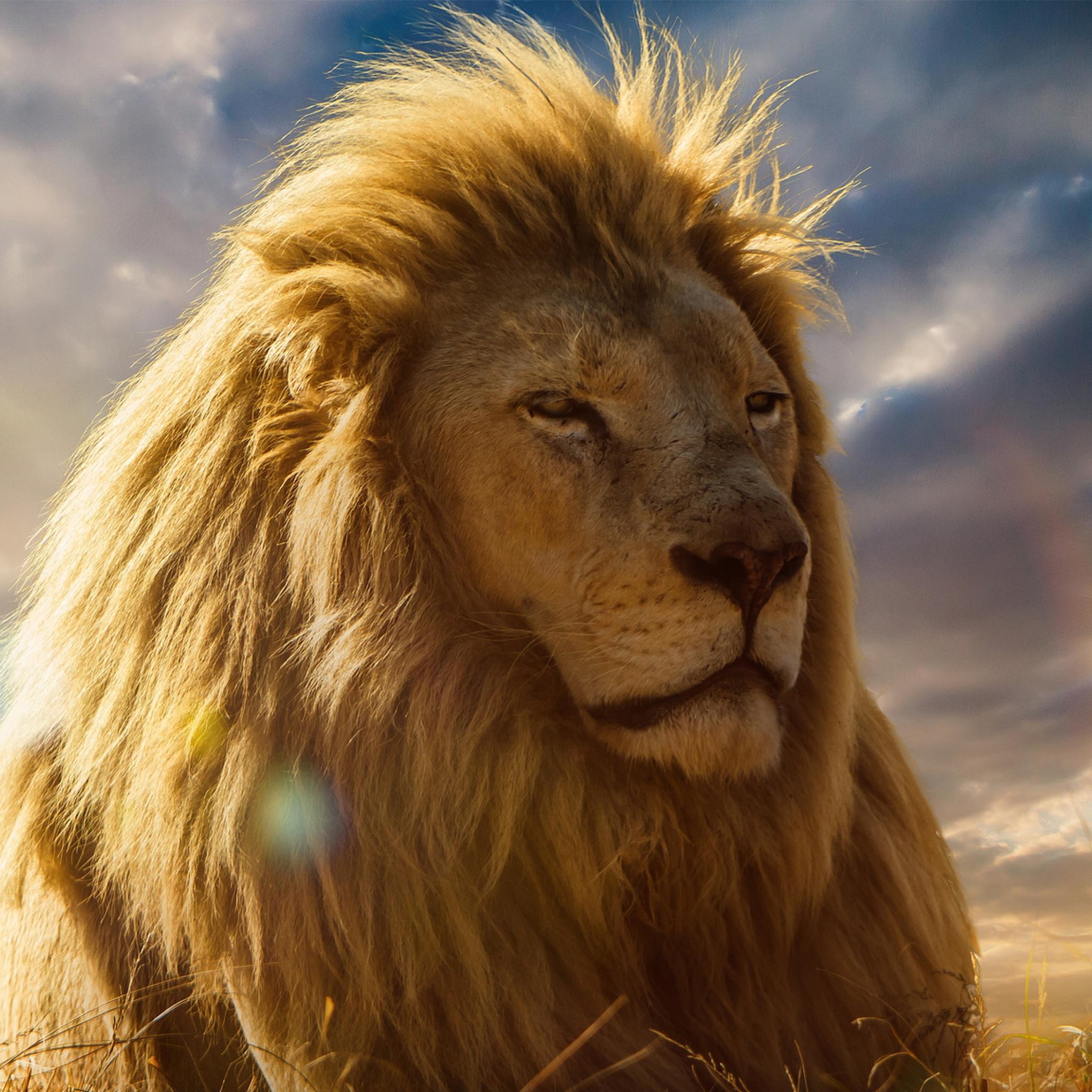 2048x2048 lion king 4k ipad air hd 4k wallpapers images - Lion king wallpaper ...