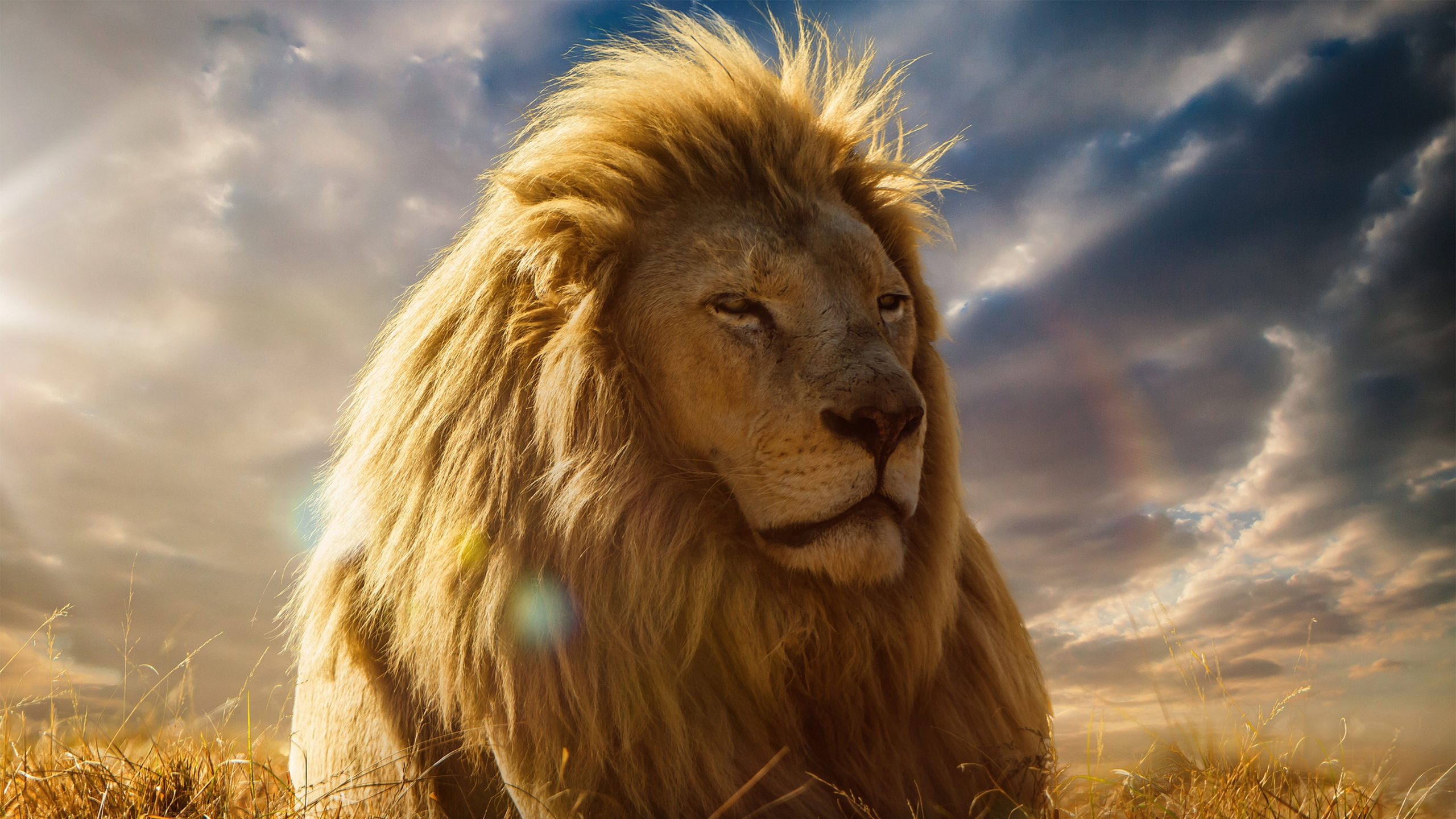 2560x1440 lion king 4k 1440p resolution hd 4k wallpapers, images