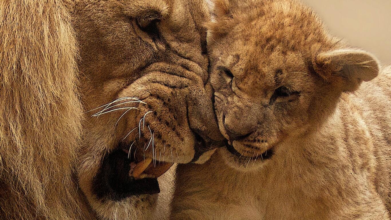 lion-mother-cub.jpg