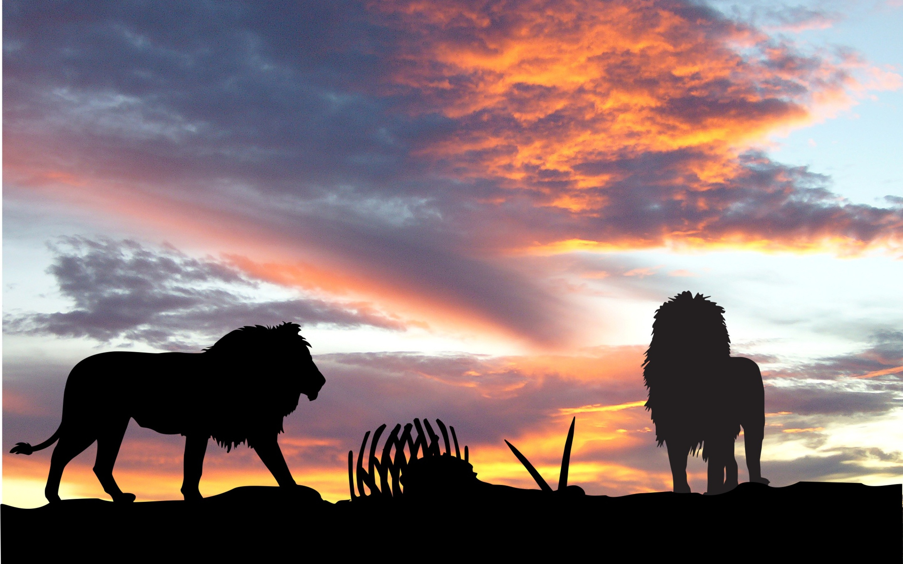Lions Africa Silhouette Sunset Od