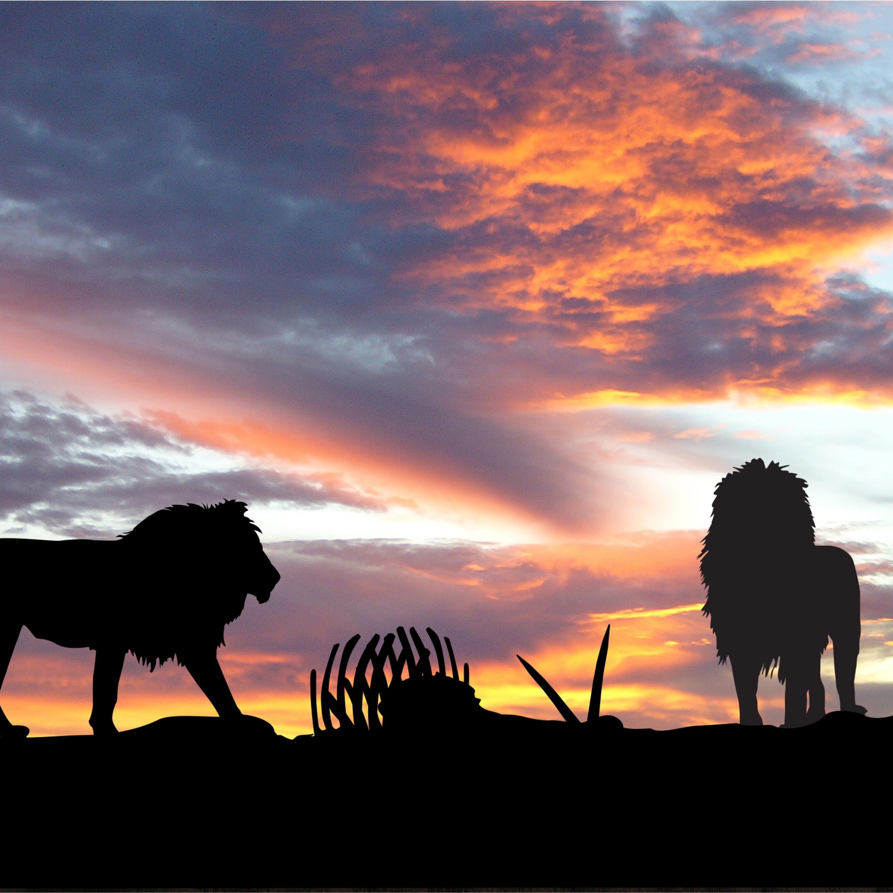 lions-africa-silhouette-sunset-od.jpg