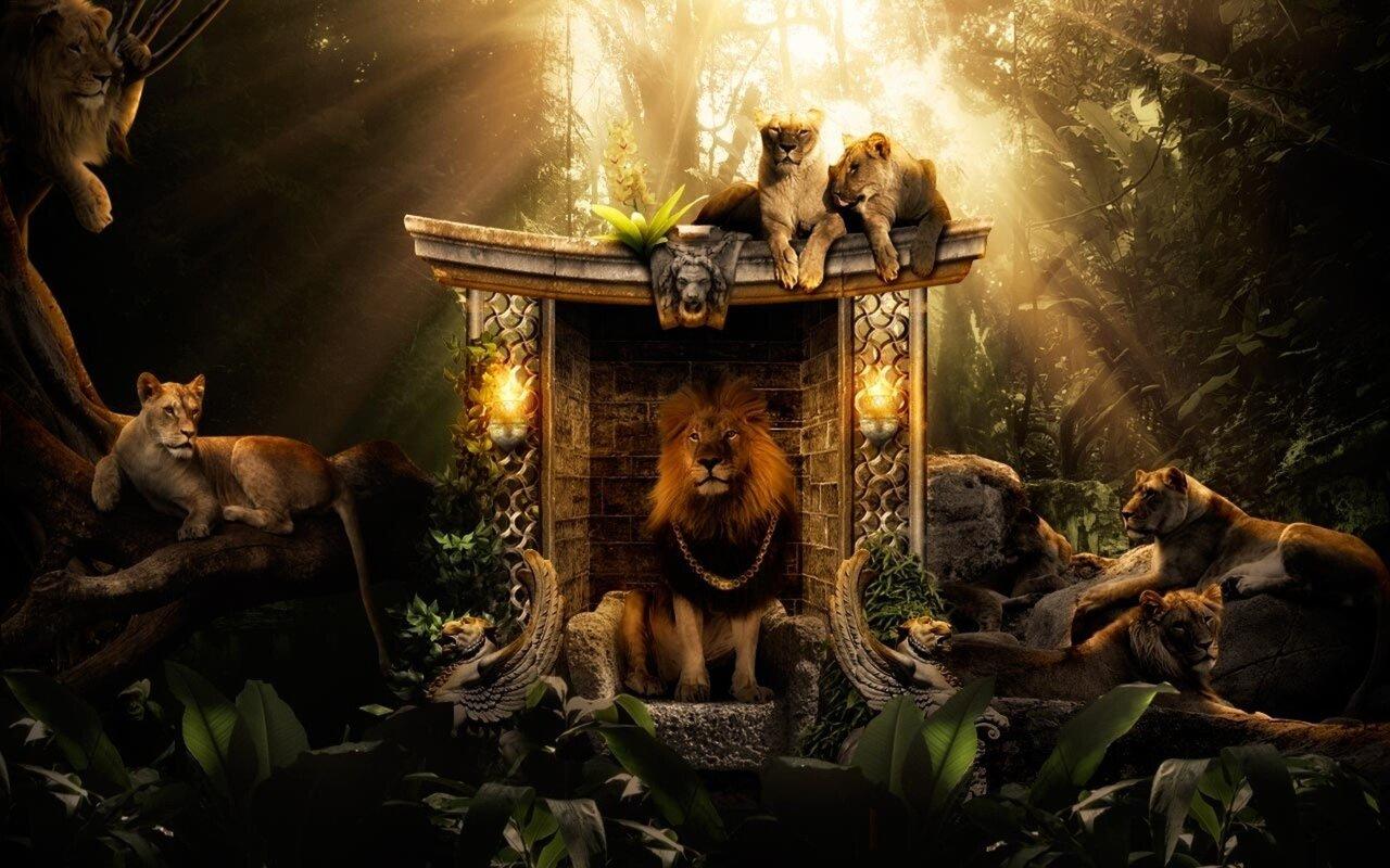 lions-jungle.jpg