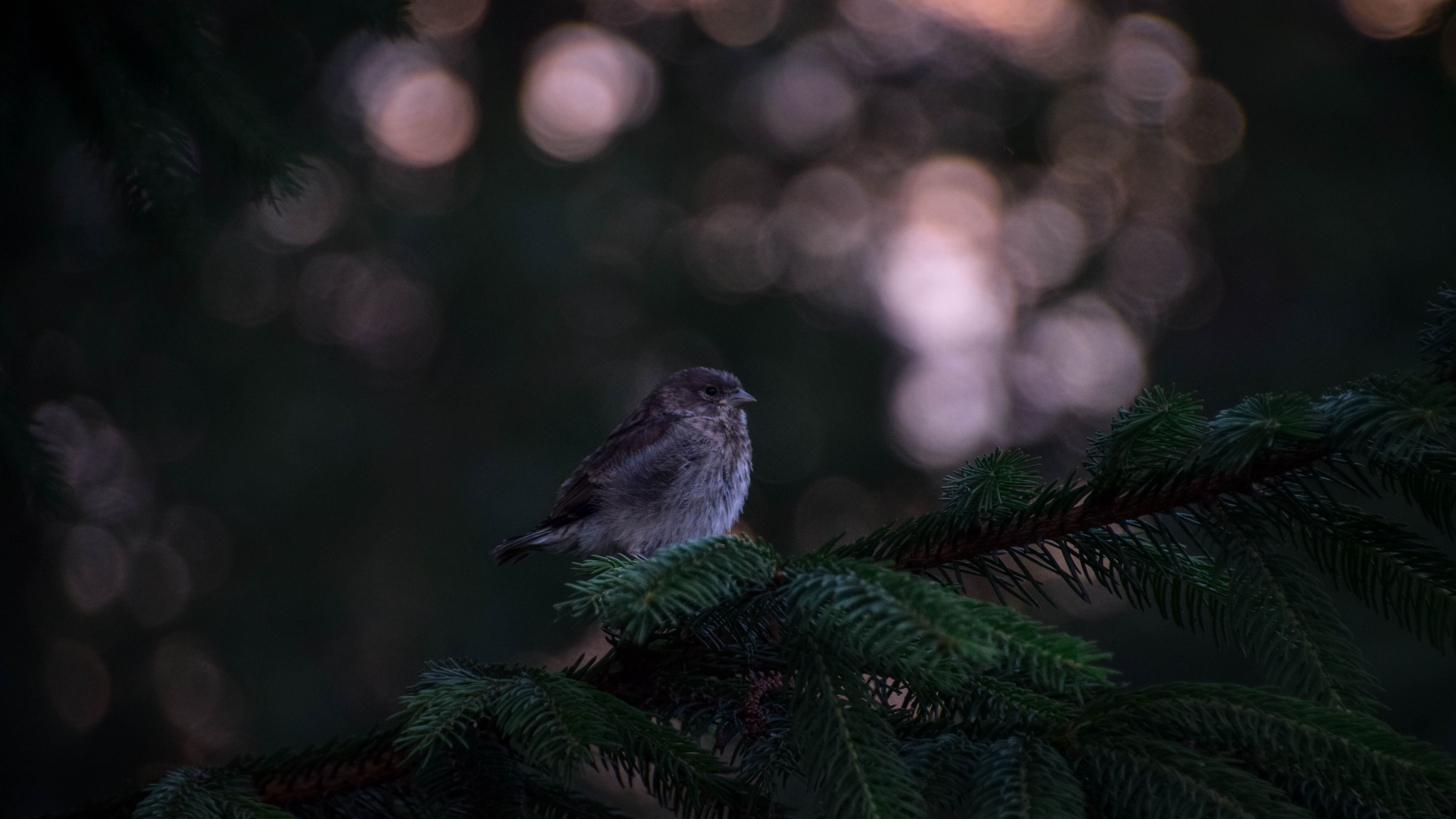 little-bird-in-forest-5t.jpg