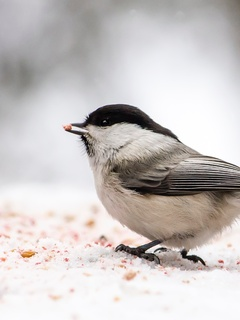 little-bird-in-forest-winter-ei.jpg
