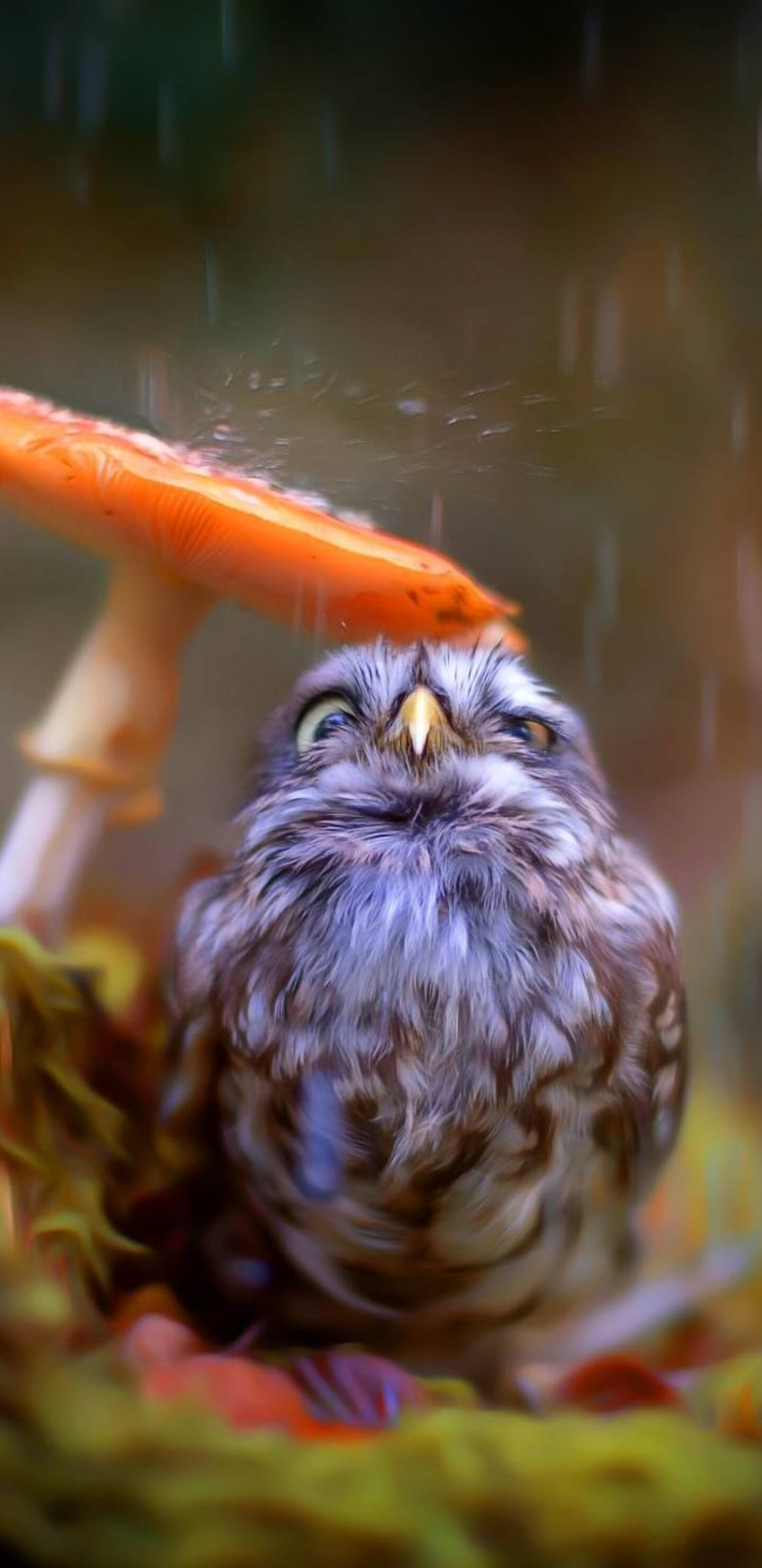 little-cute-owl-new.jpg