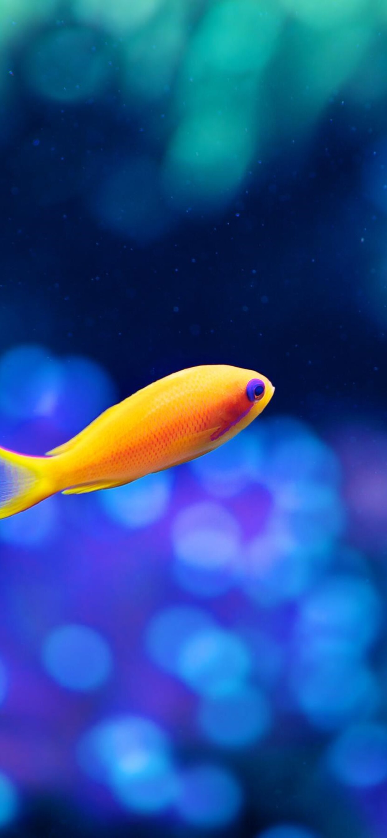 1242x2688 Little Fancy Fish Iphone Xs Max Hd 4k Wallpapers