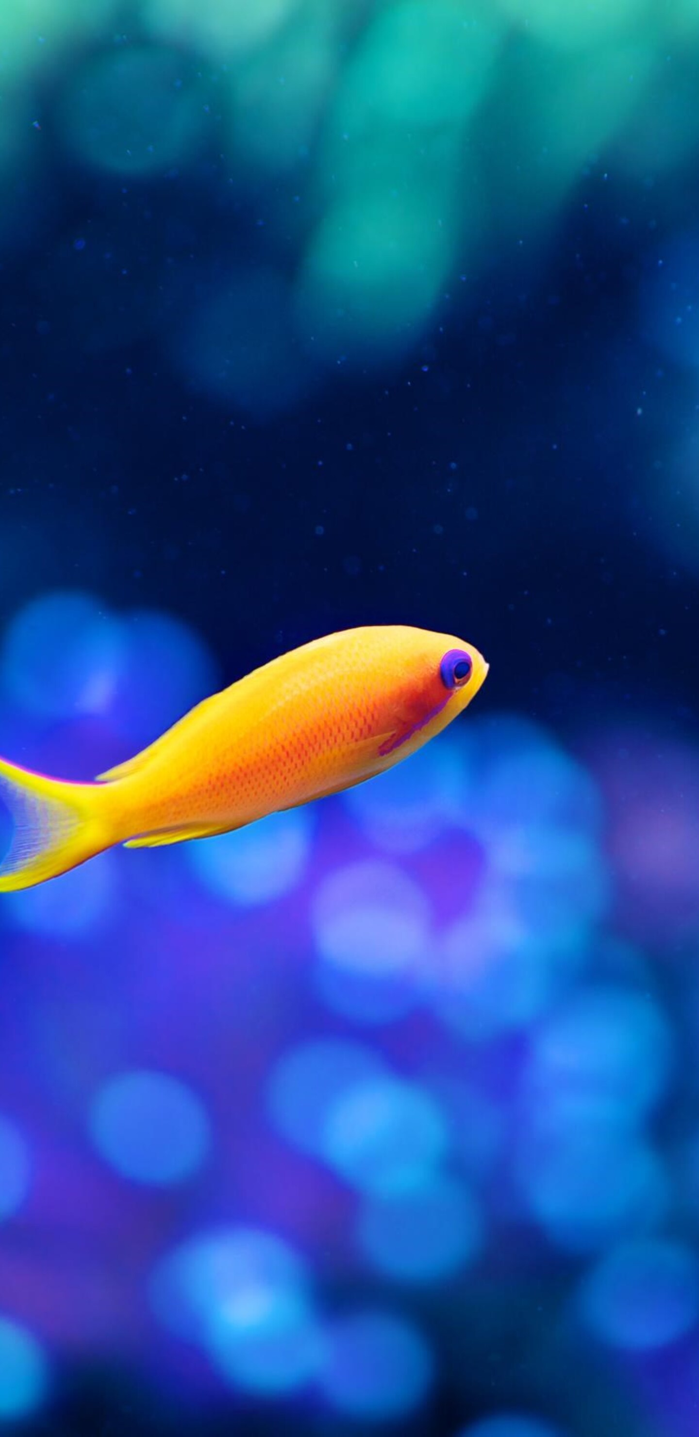 1440x2960 Little Fancy Fish Samsung Galaxy Note 9 8 S9 S8 S8 Qhd