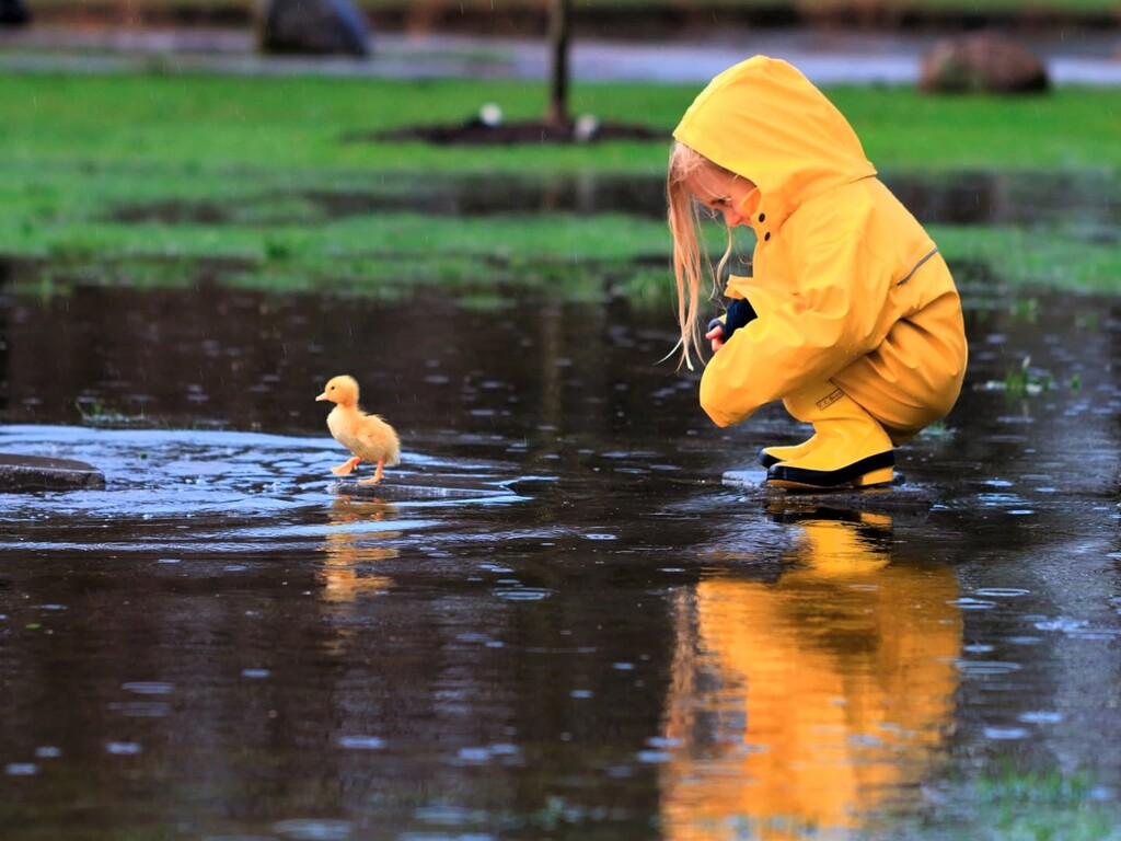 little-girl-playing-with-duckling-qw.jpg