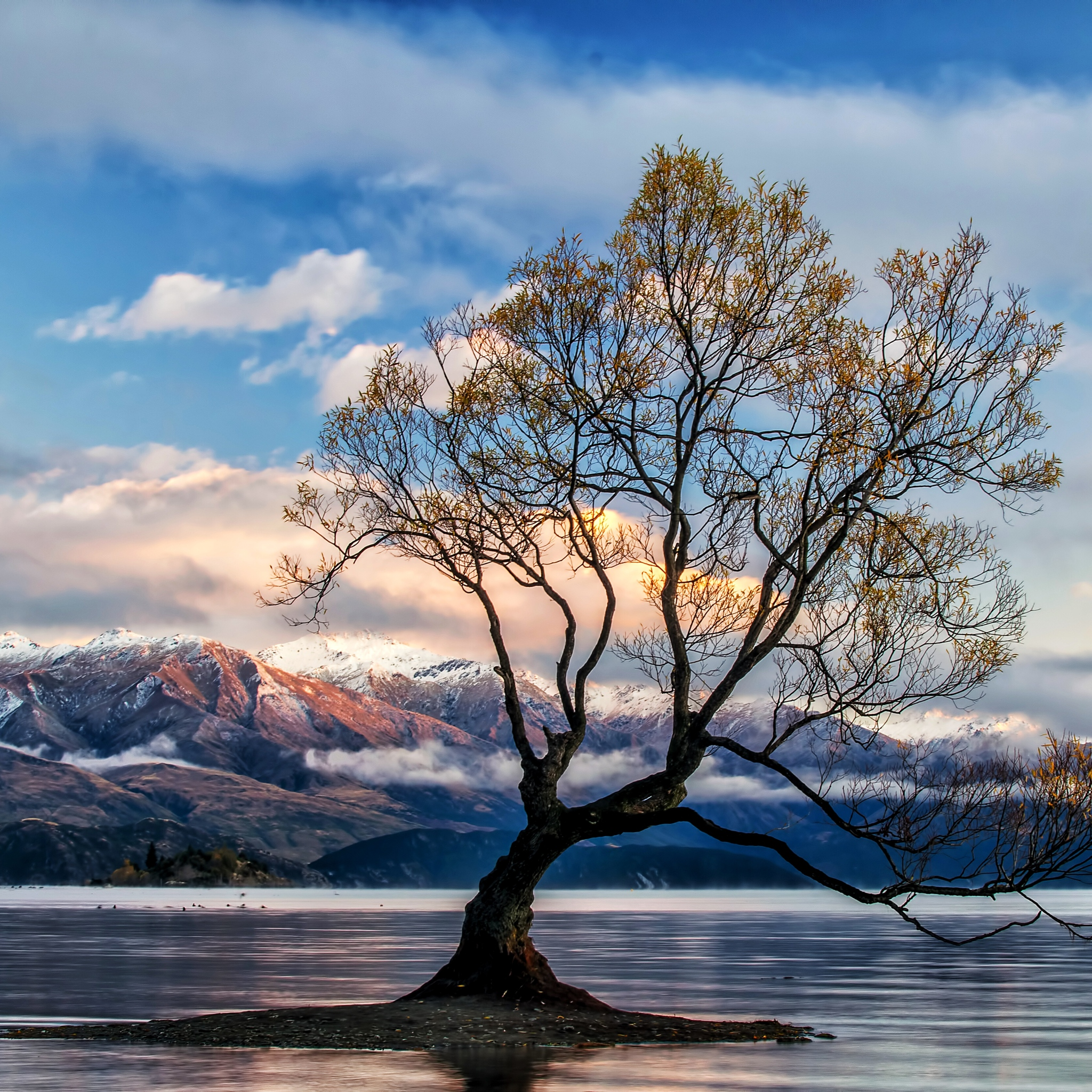 Computer Wallpaper Nz: 2048x2048 Lone Tree Lake Wanaka Ipad Air HD 4k Wallpapers