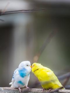 love-birds-4k-u5.jpg