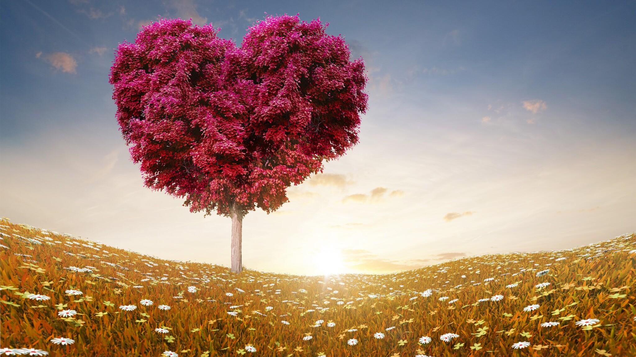love-heart-tree.jpg