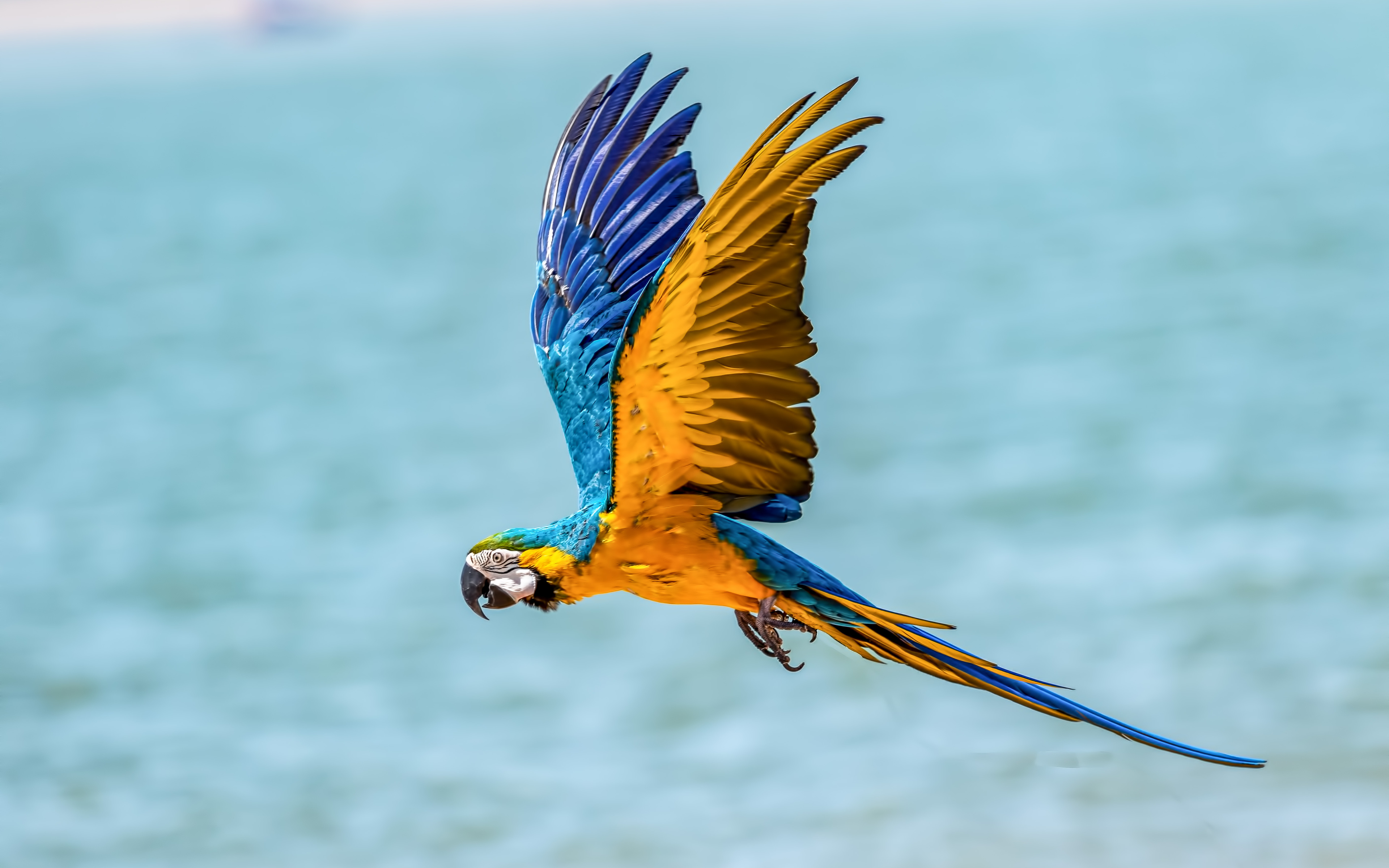 3840x2400 Macaw Bird 5k 4k Hd 4k Wallpapers Images Backgrounds Photos And Pictures