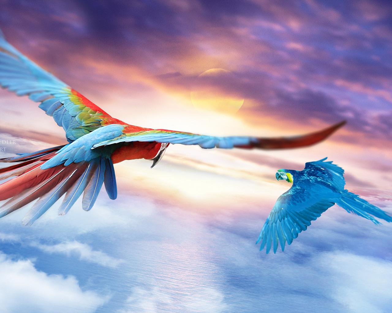 macaw-jounrey-4k-wx.jpg