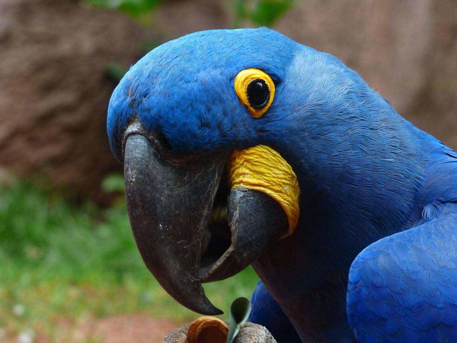 macaw-parrot-2.jpg