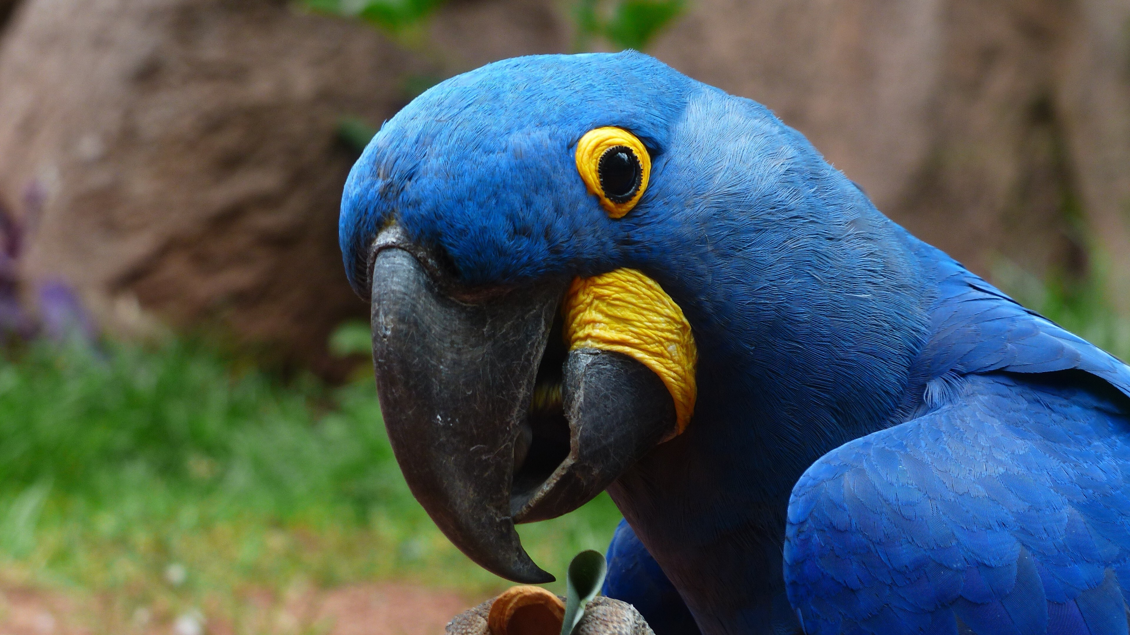 macaw-parrot-2.jpg