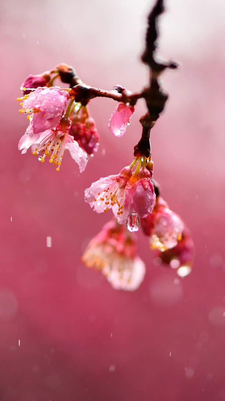 macro-blossom-flowers-dews-4k-aa.jpg