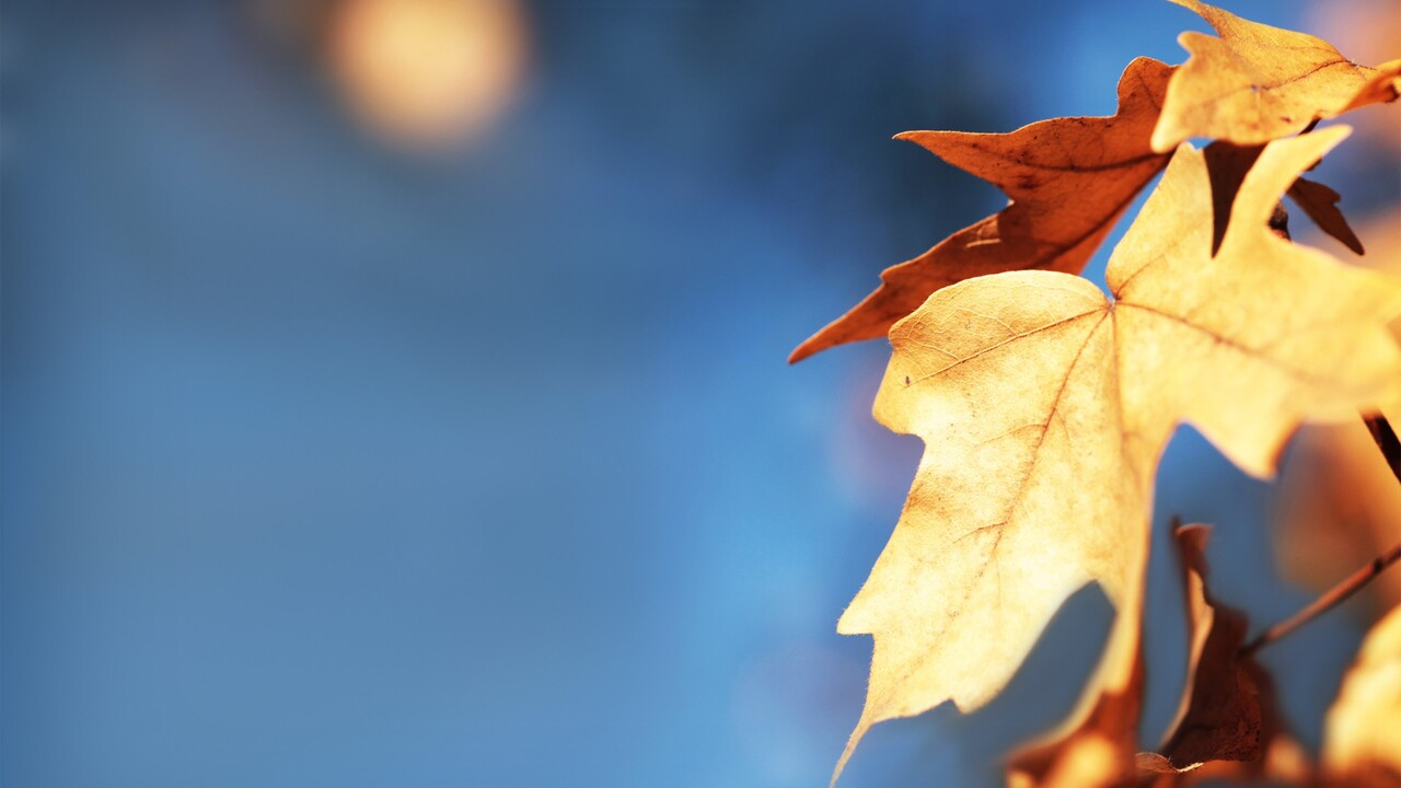 macro-leaves-wide.jpg