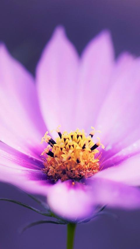 macro-pink-flower-r0.jpg